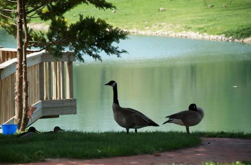 Acacia-Lake-06.jpg
