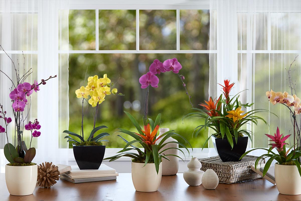PP_13_OrchidGardens_HERO_W2.jpg