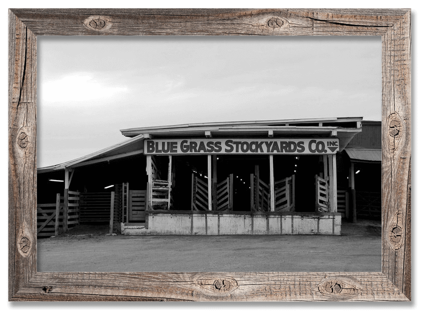 Blue-Grass-Stockyards-Historic-Photo.JPG