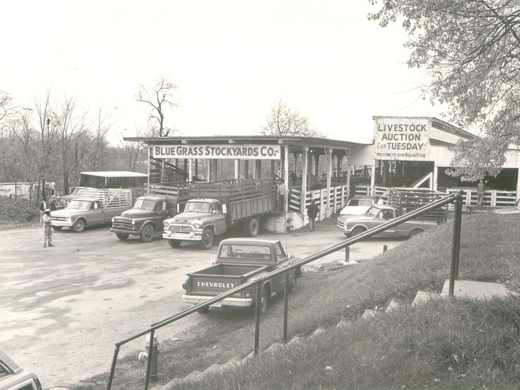 Midcentury photo of the downtown Blue Grass Stockyards.