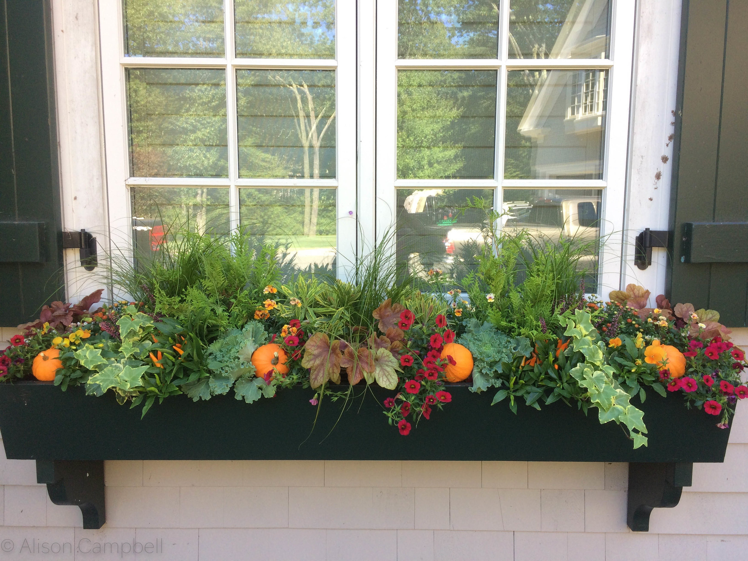 fall pumpkin windowboxes.jpg