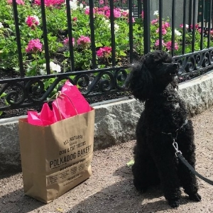 July Pup of the Month   Lynn Deitzer and her miniature poodle Joy