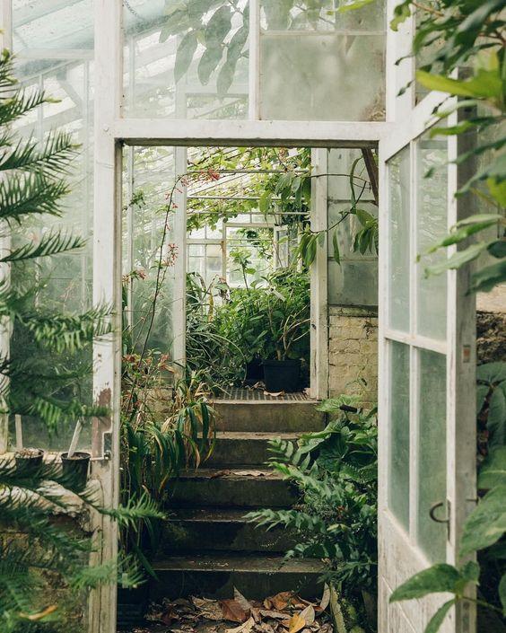 Lush Greenhouse.jpg