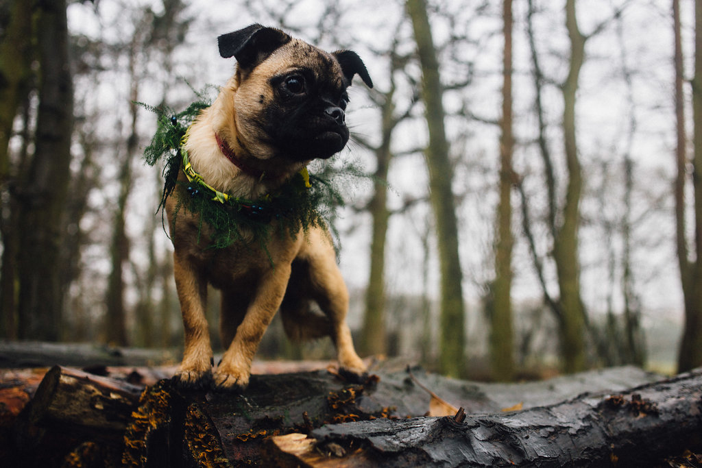 Dog in Floral Crown - Captains Wood Barn Essex