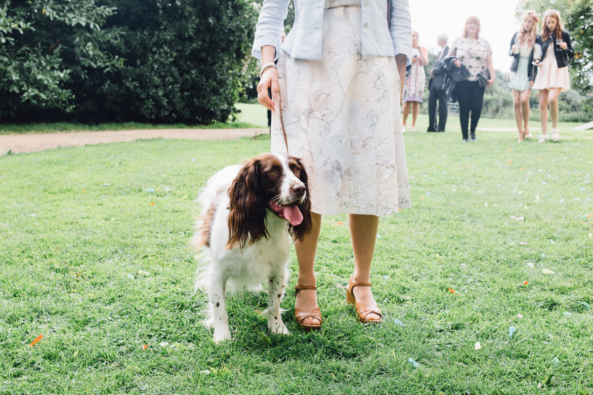 Dog at Wedding wearing Bow Tie
