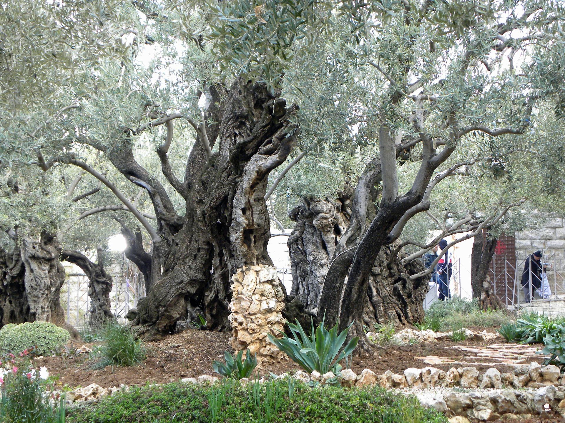 gethsemane-556051_1920.jpg