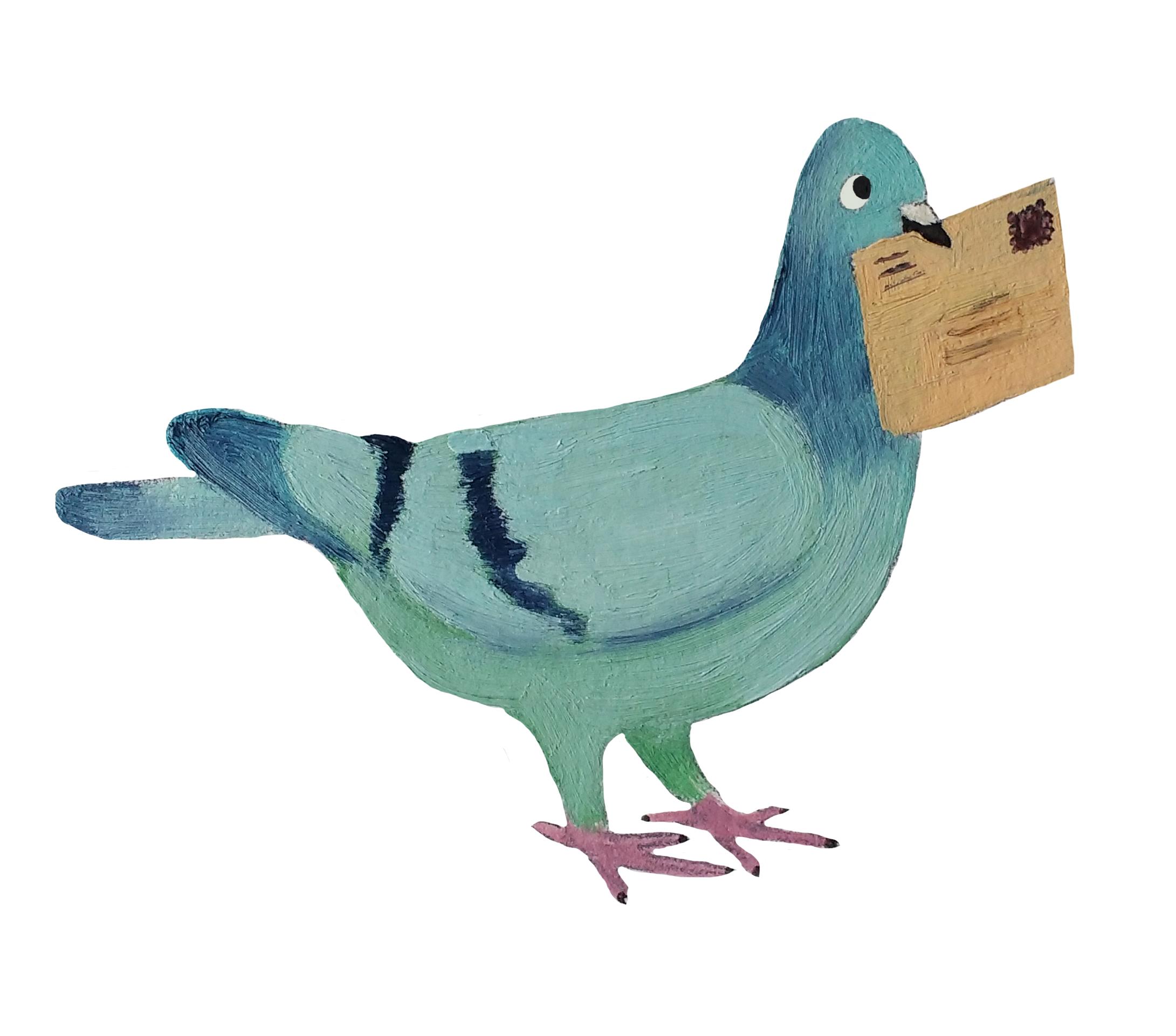 pigeon contact me.jpg
