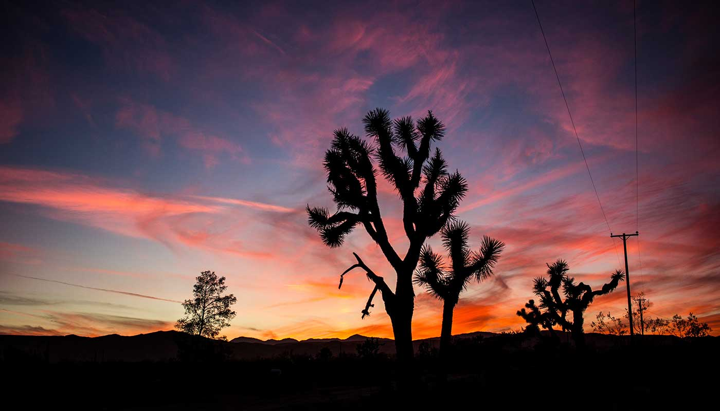 Escape Plan: The Desert Guide to Joshua Tree for   Editors Inc  .