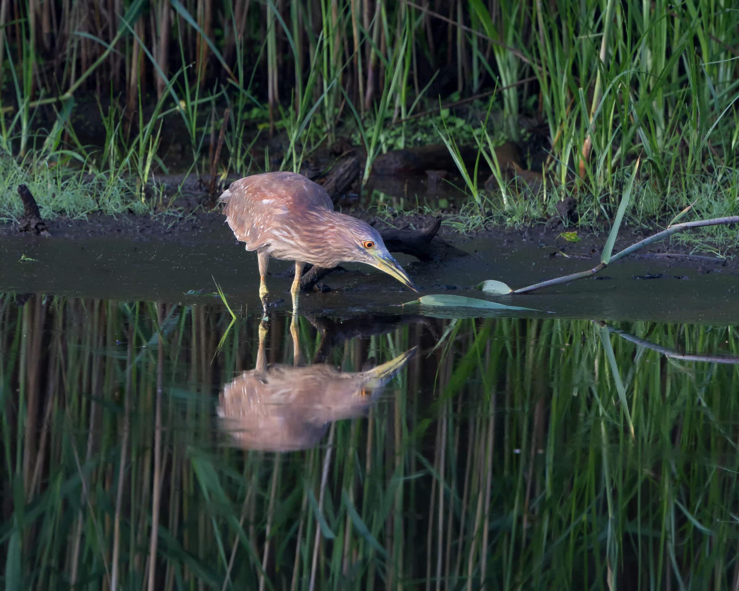 WaterBird.jpg