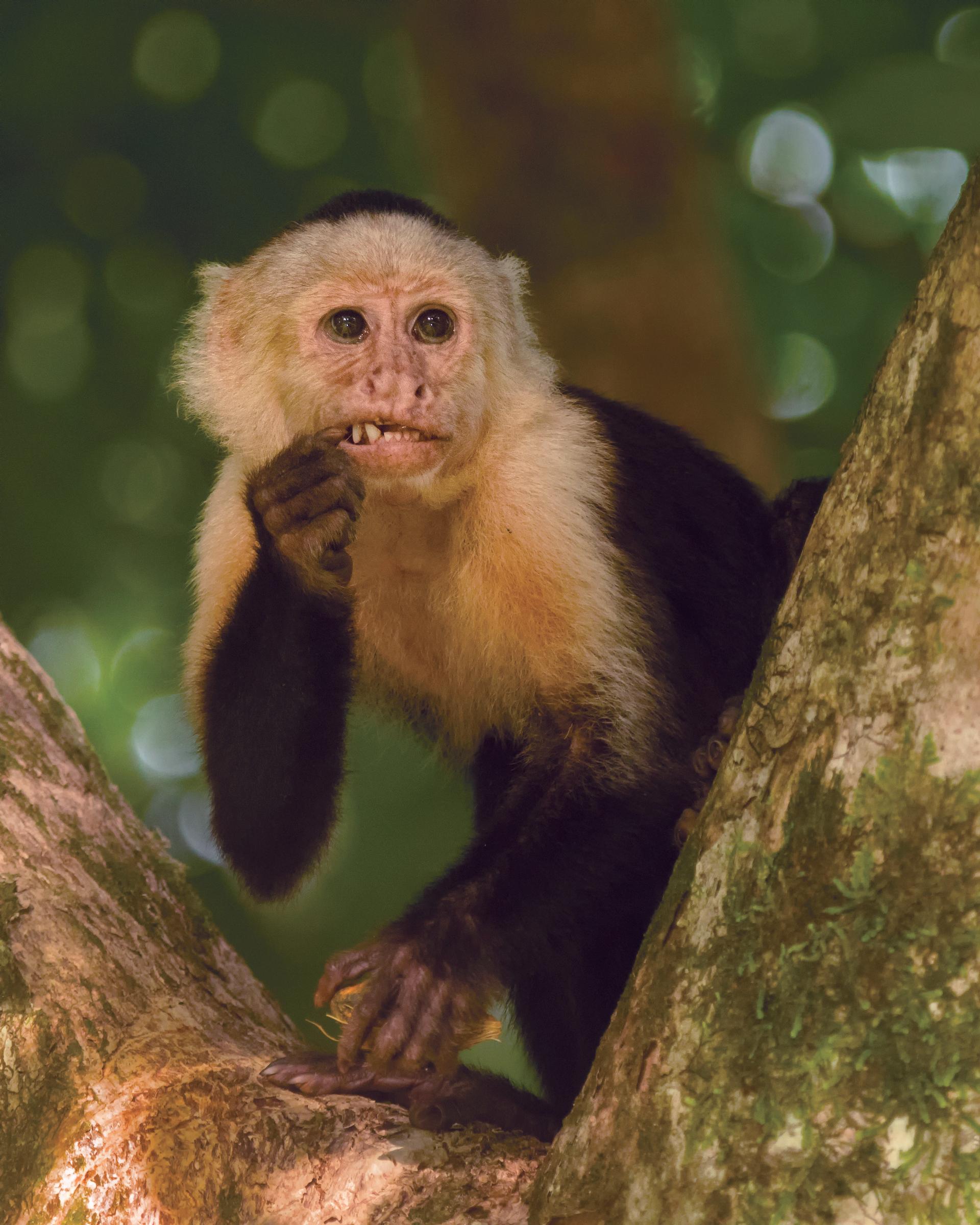 MonkeyTeeth_ret.jpg