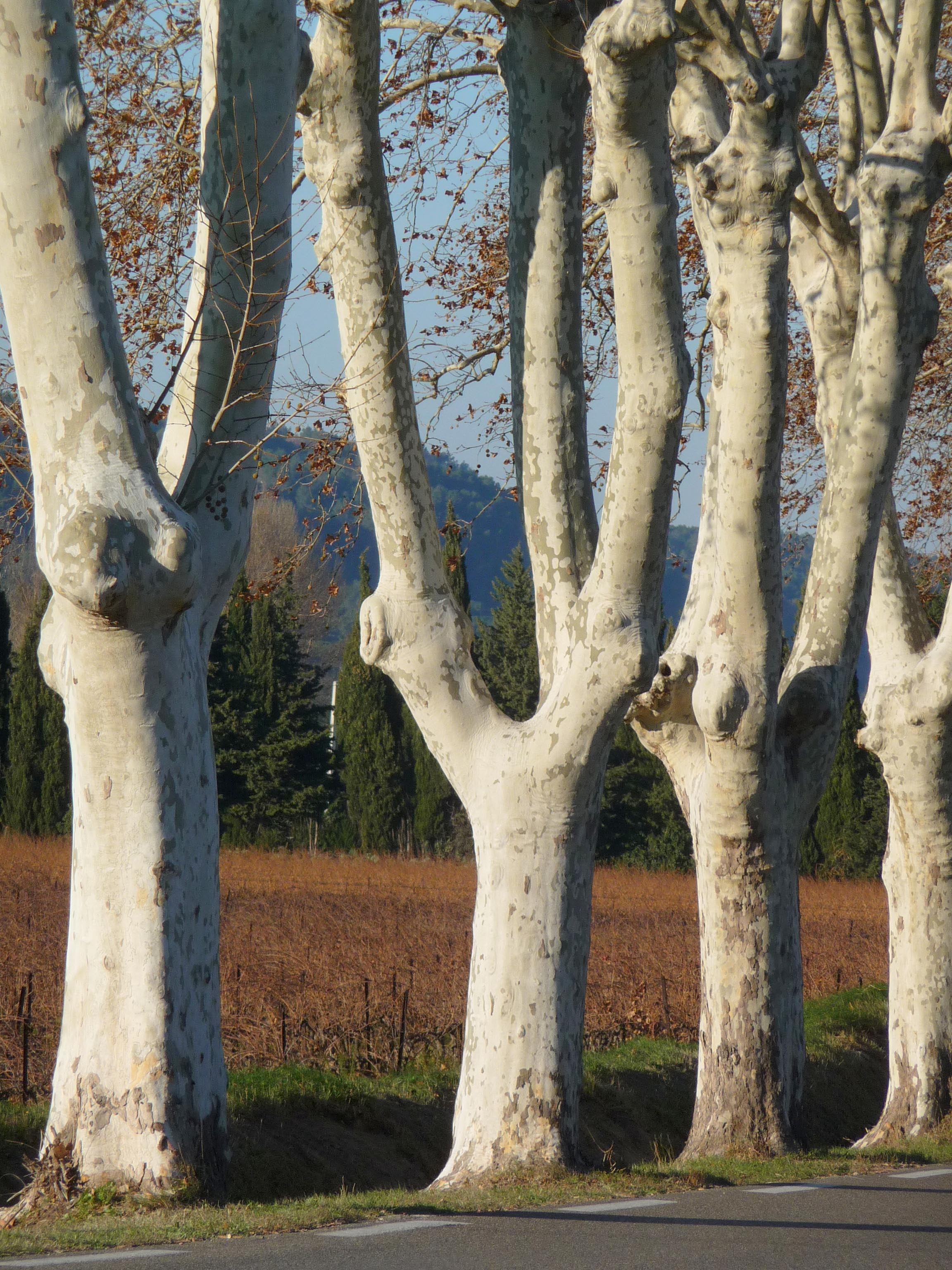 French Trees.jpg