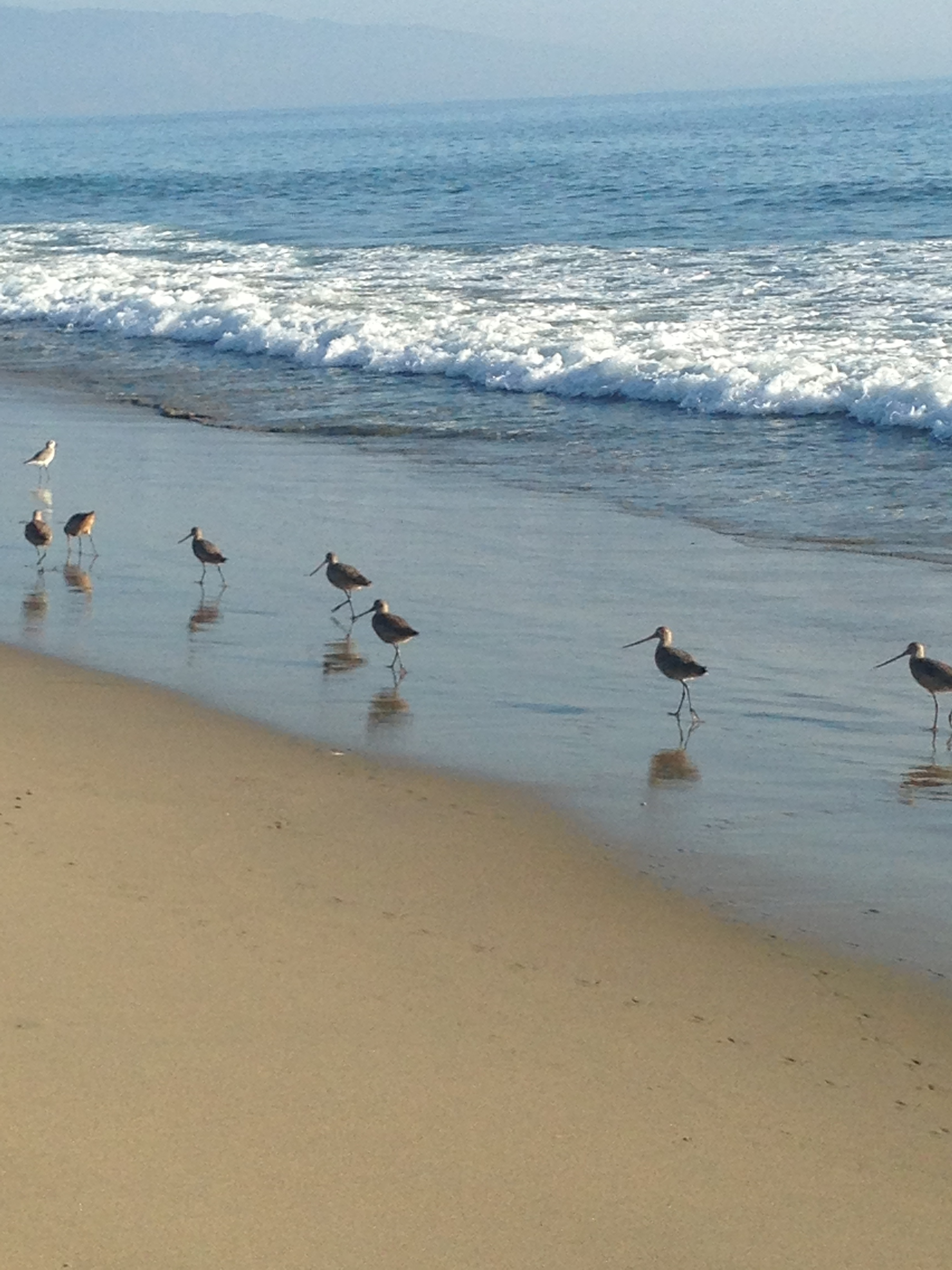 Sand Pipers on the Beach.JPG