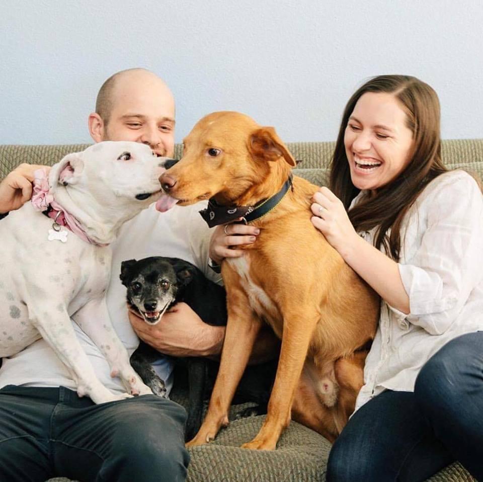 mutt scotts dog adopt california.jpg