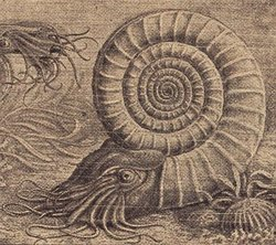 250px-Ammonit2.jpg