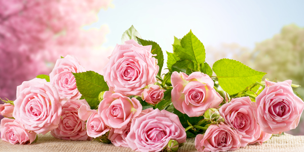 Pink-Rose-Bouquet-CS-120.jpg