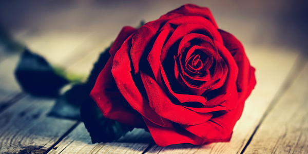 Single-Red-Rose-CS-127.jpg