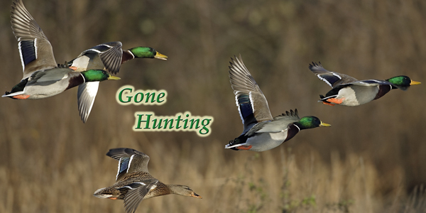 Gone-Hunting-Duck-CS-187.jpg
