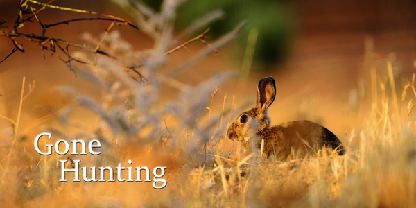 Gone-Hunting-Rabbit-CS-191.jpg