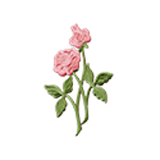 Classic-Rose.jpg