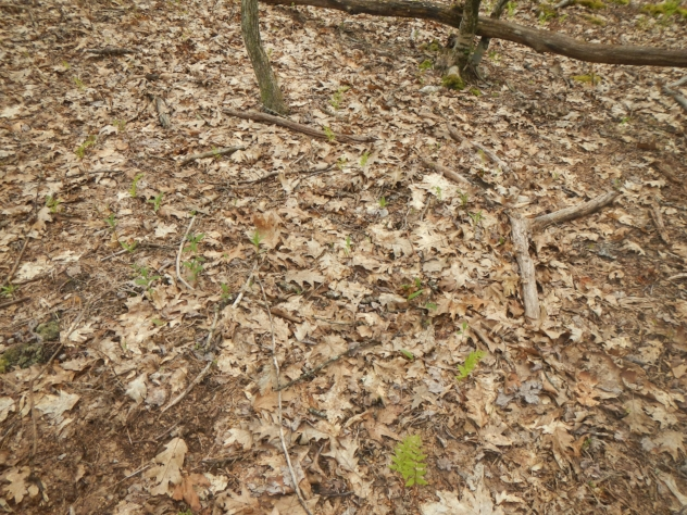 VOLATILE ORGANIC COMPOUNDS RELEASED DURING LITTER DECOMPOSITION AND THIER RELEVANCE TO SOIL ECOLOGY