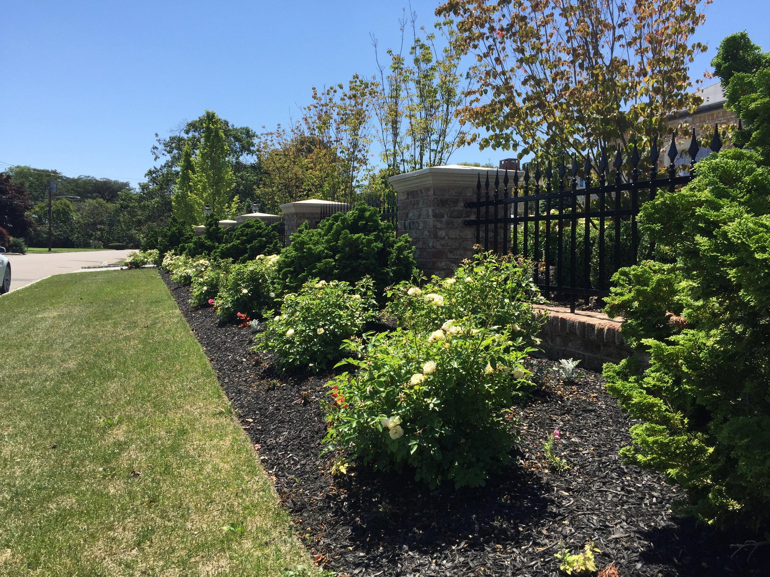 Top shrub planting design in Long Island, NY