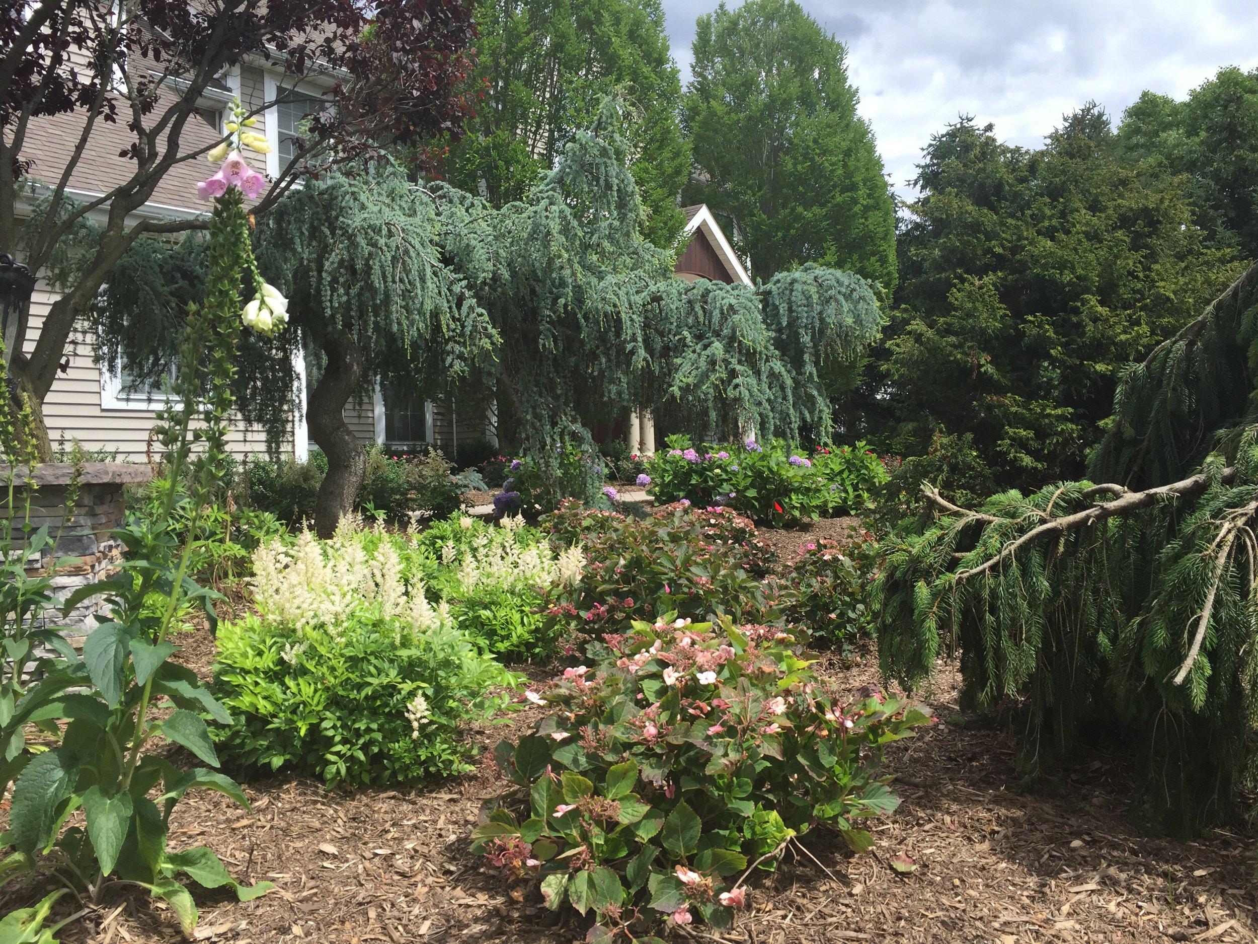 Experienced landscape shrub design company in Long Island, NY