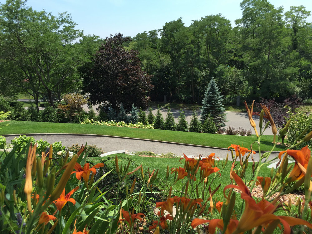 Choosing Native Plantings for Your Long Island NY Landscape Architecture