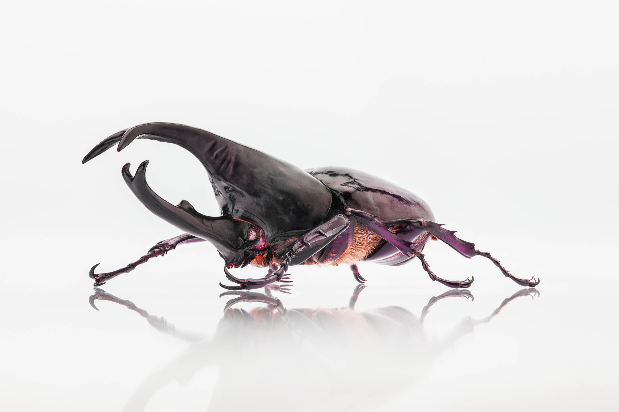 Bugs0231B_PDN.jpg