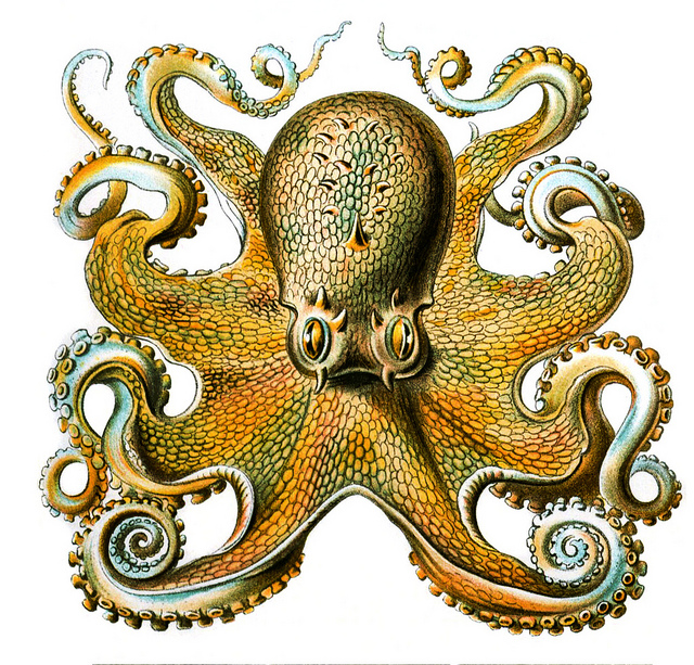 Illustration of an octopus with tentacles curling up.