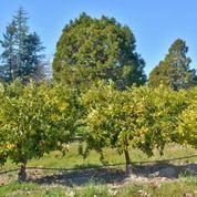 orchard green.jpg