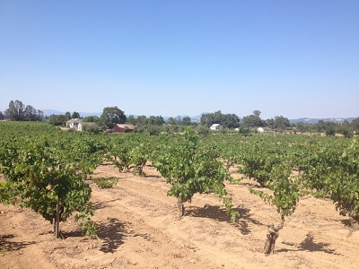 old-vine-zine-mancini-ranch