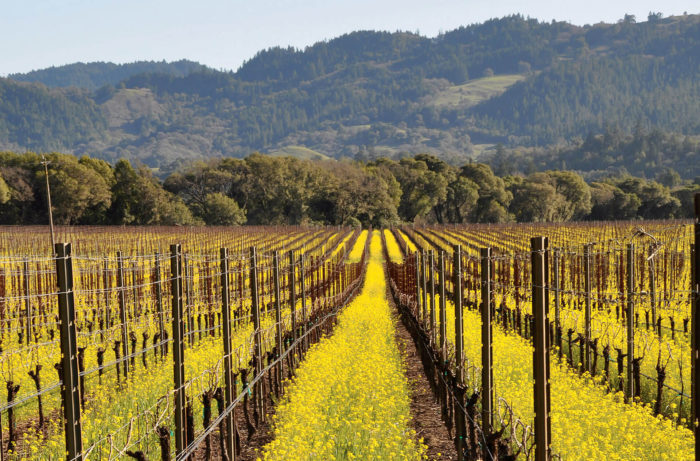 Ferrington_-Vineyard_in_spring-700x461.jpg