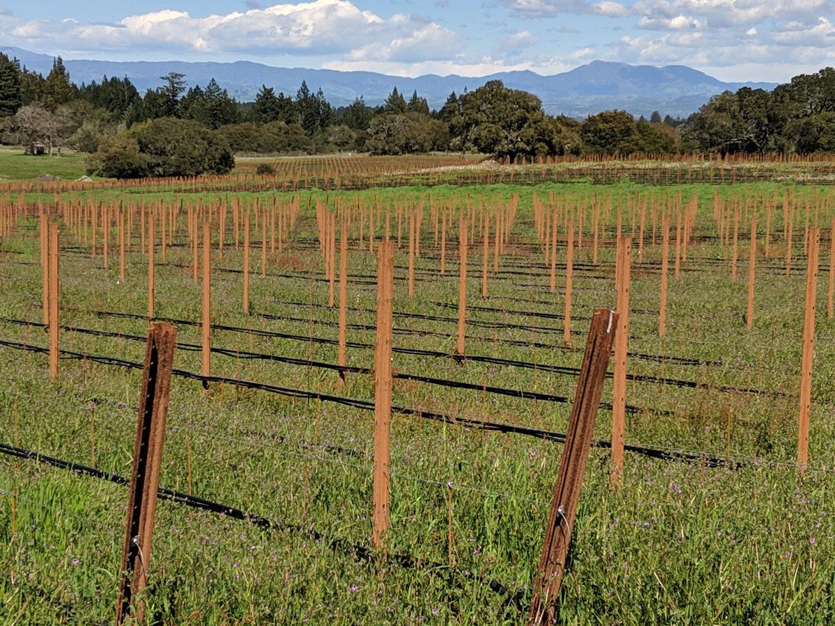 Coleman Valley Mt St Helena zoom.jpg