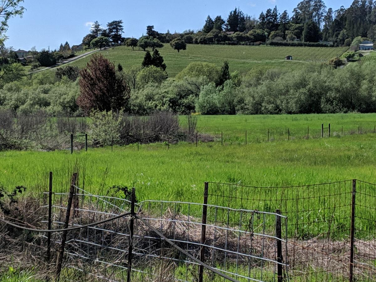 Meredith Estate vineyard on hillside is a neighbor.
