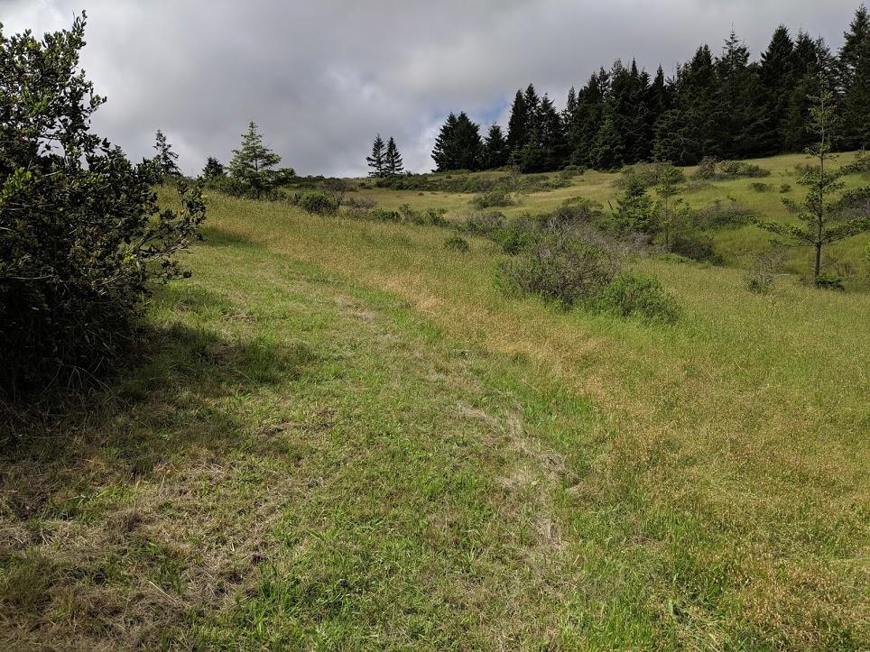 Lower portion of upper meadow looking toward Fitzpatricks Lane.