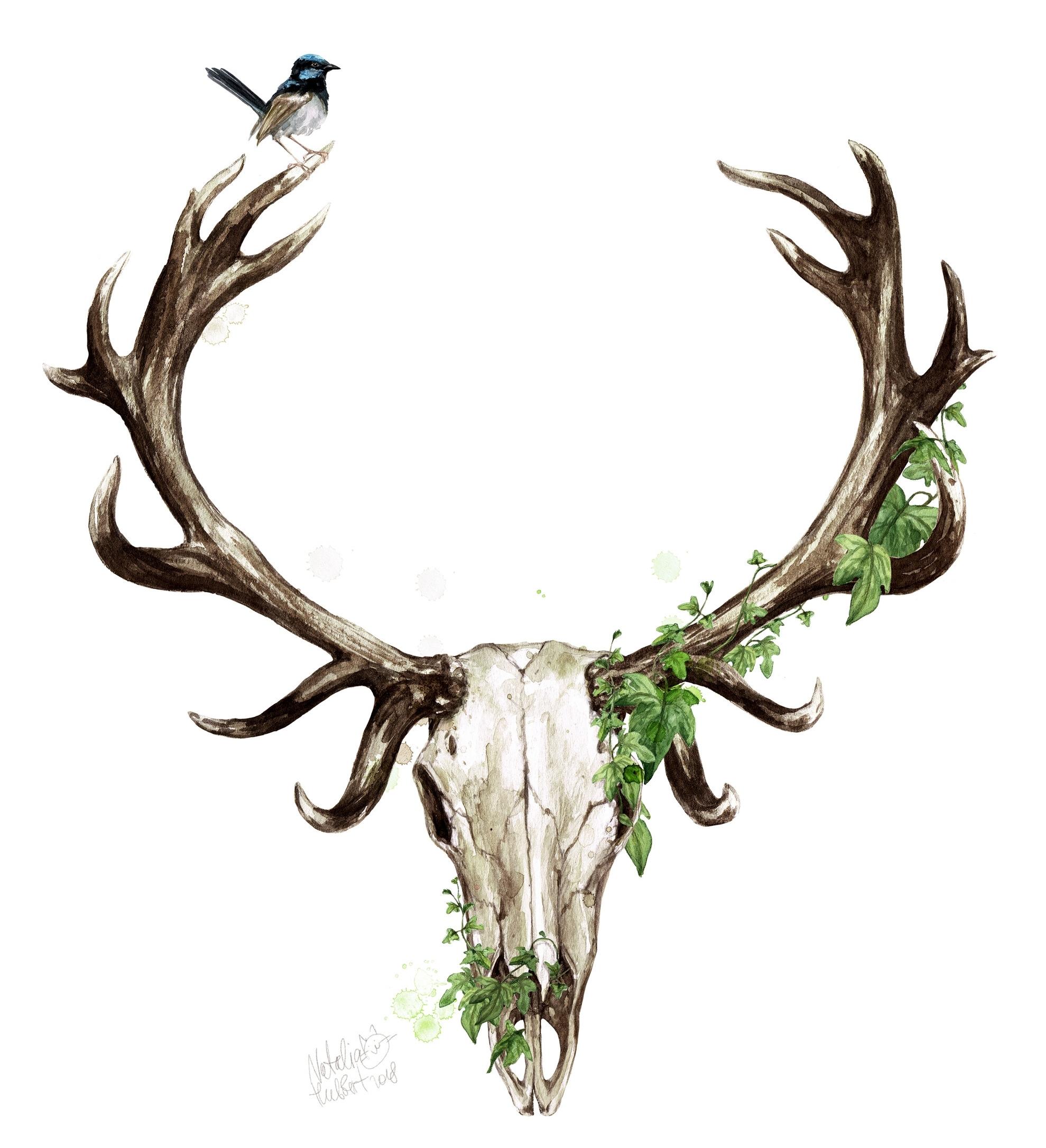 DeerSkull_NH_2018.jpg