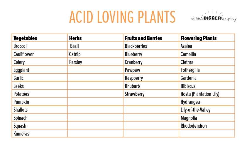 Acid Loving Plants Guide.jpg