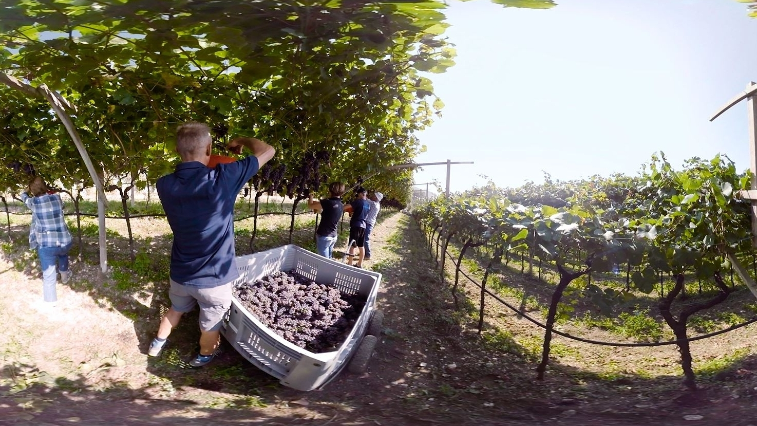 Cavit Wine 360 - Palm Bay International wanted to showcase the people and process behind America's number one wine import. The 360° video experience brought viewers to the lush beauty of Northern Italy's Trentino region, where a variety of Cavit grapes are grown. The experience was shown on Gear VR headsets at a top food and beverage expo.