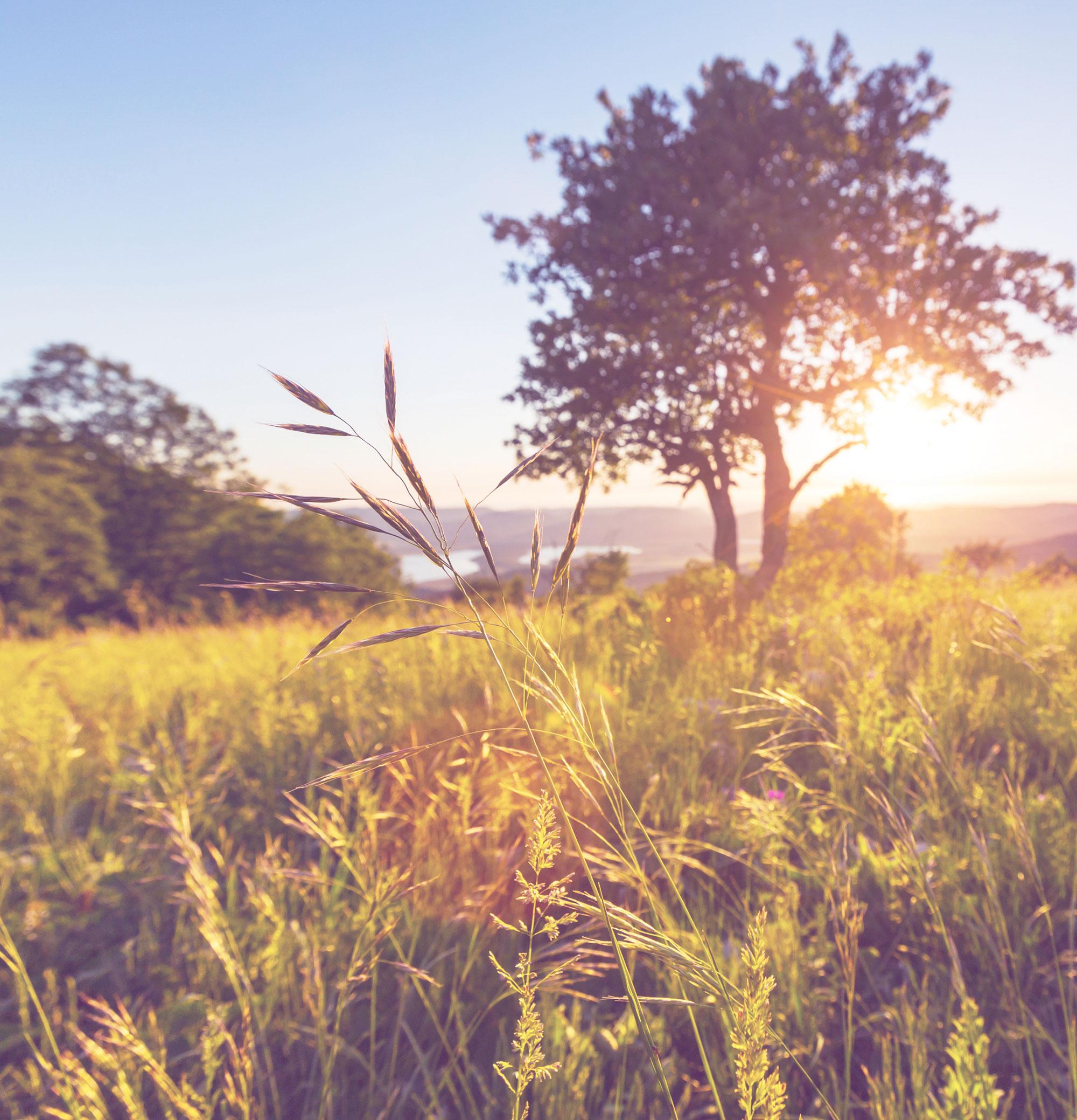 bigstock-meadow-in-mountains-62344016-(1).jpg