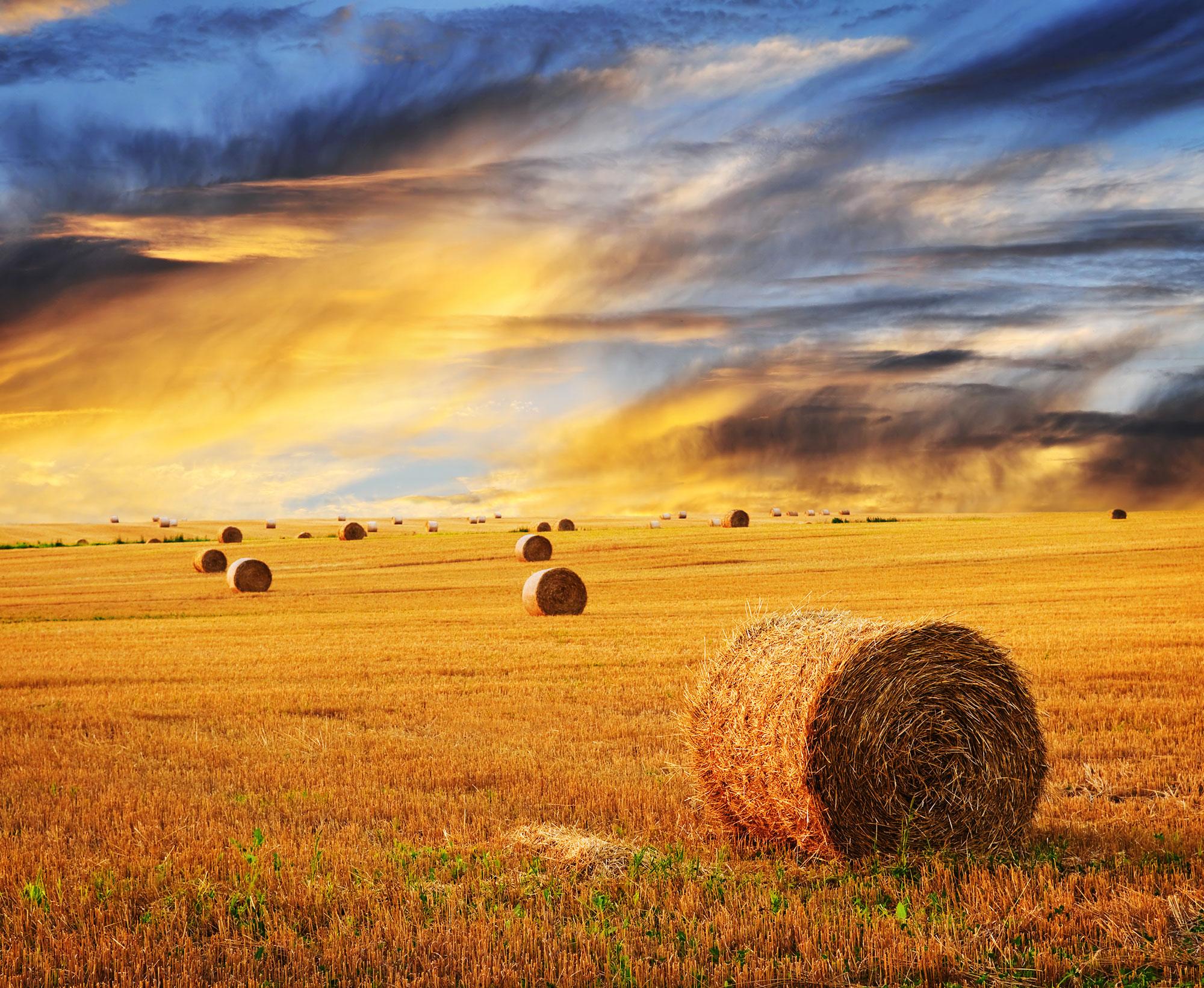 bigstock-Golden-Sunset-Over-Farm-Field-6813037.jpg