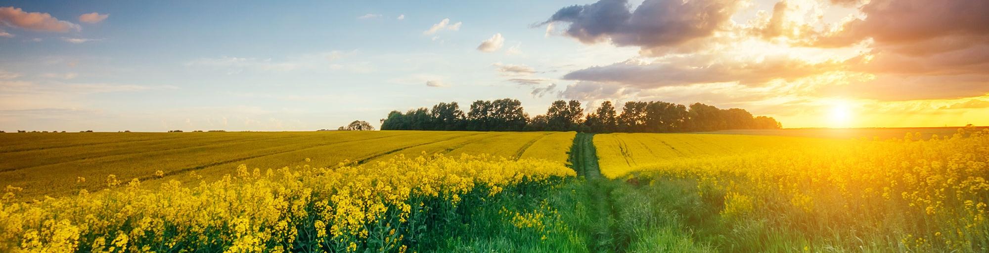 bigstock-Fantastic-views-of-the-green-g-128236568.jpg