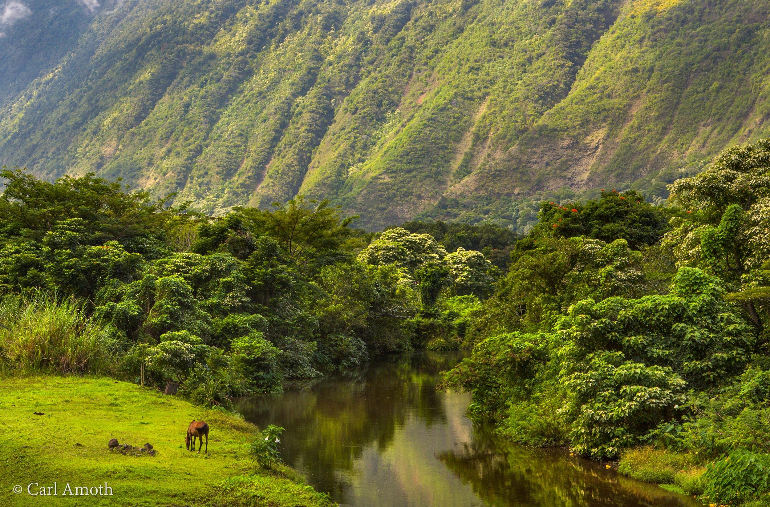 Waipio Valley, Hawaii |  Buy