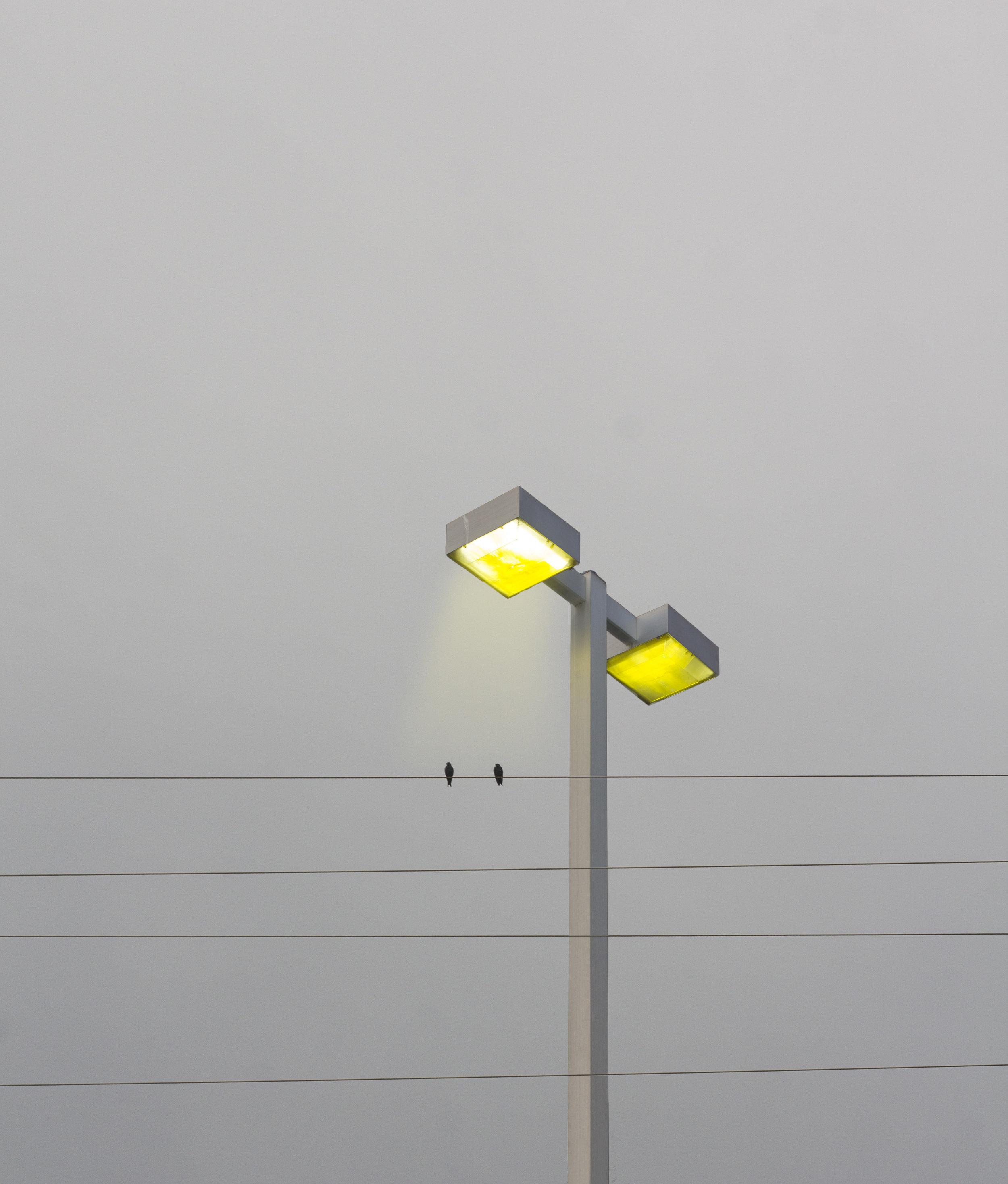 ligh&bird.jpg