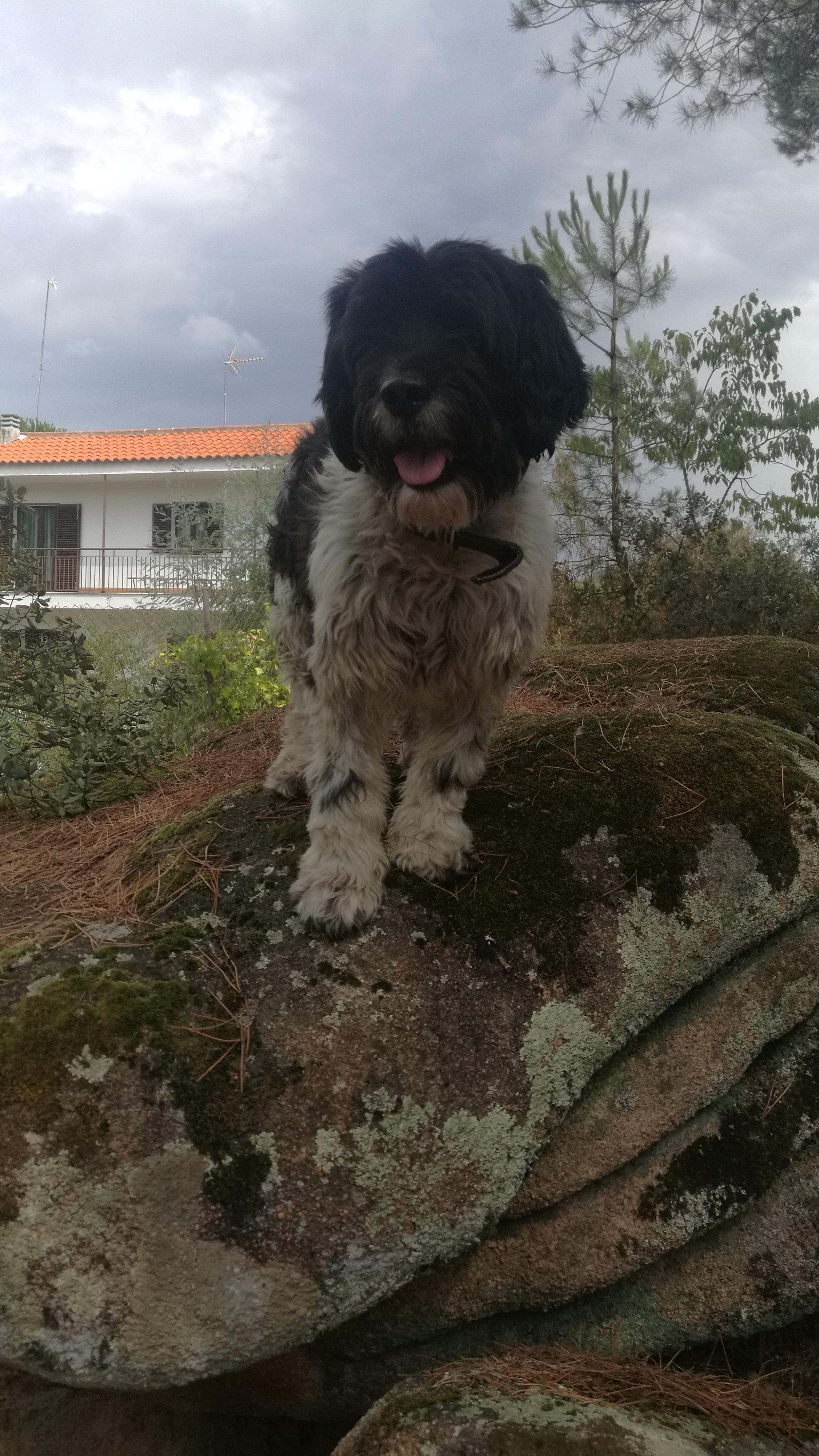 Reymond, the family dog.