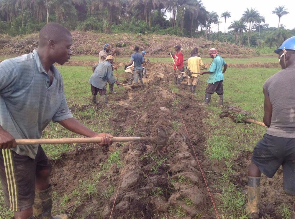 Workers developing Harbel farmland!