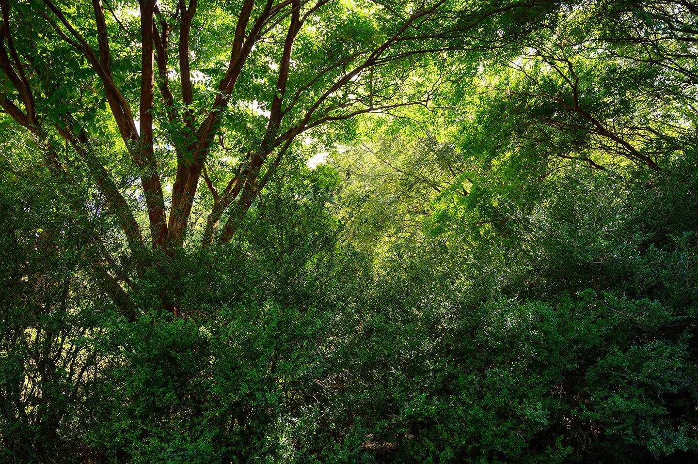 Keith M Photography_National Arboretum_02.jpg