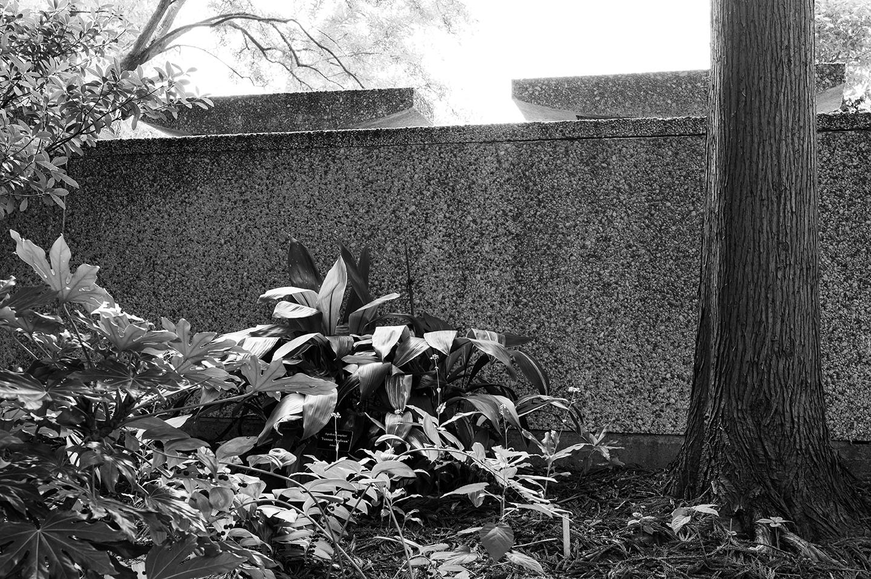 Keith M Photography_National Arboretum_05.jpg
