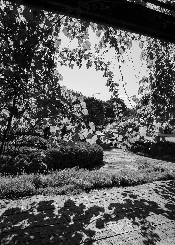 Keith M Photography_National Arboretum_15.jpg