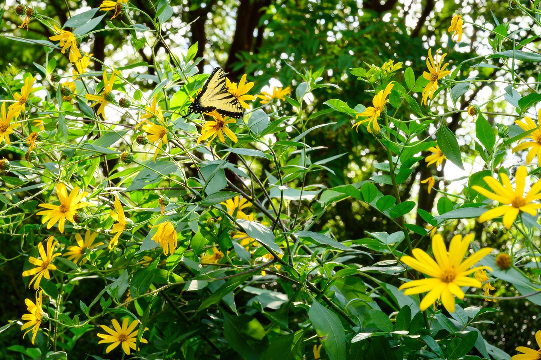 Keith M Photography_National Arboretum_25.jpg