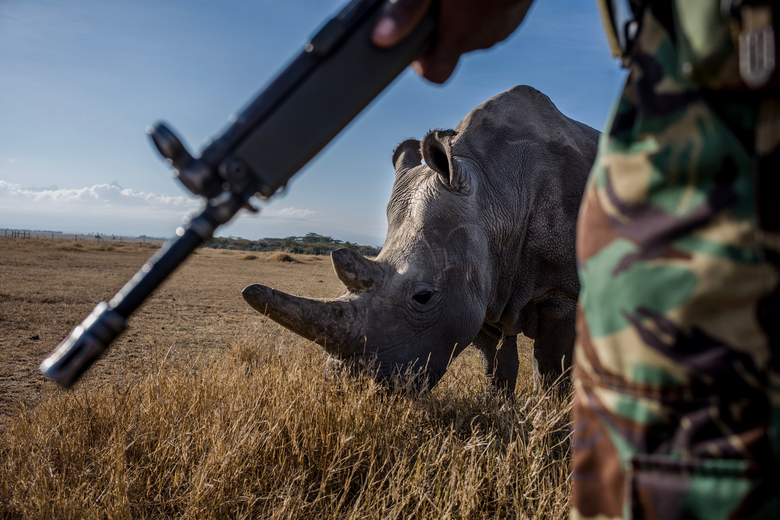 The Last Remaining Nothern White Rhinos_Justin Mott_006.JPG